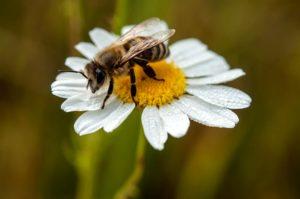 Volksbegehren Bienensterben