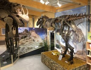 Urzeitmuseum Dino 4