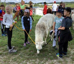 Ferienprogramm 2019 Alpaka